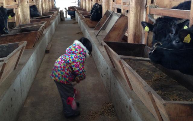 20150228 牛舎掃除