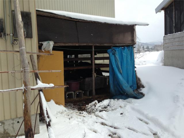 電柱の牛舎HP我が家の牛舎