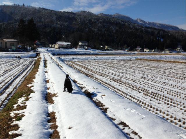 2016.1.16農道を歩くしゅうHPブログ