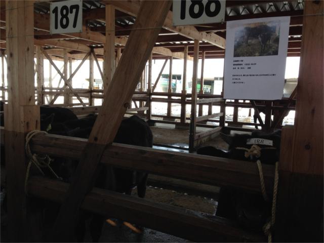 2016.3.5子牛市場1HPブログ