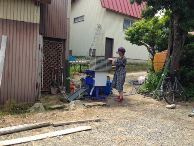 2016.6.22苗箱を洗う倫子HPブログ